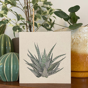 Howarthia houseplant card