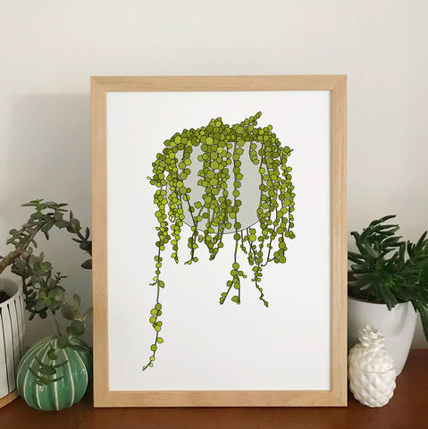 String Of Pearls Plant Print