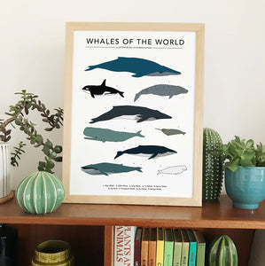 Whales Of The World Print