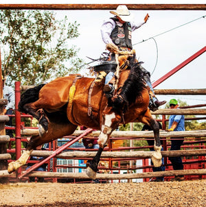 Bronc Buster - Jack Wright