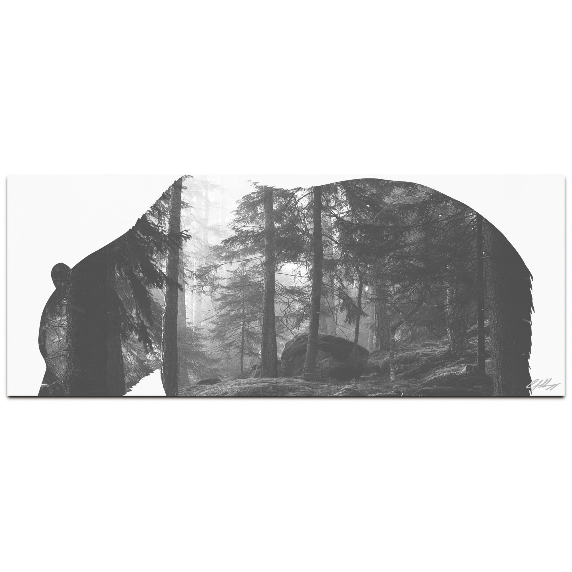 GRIZZLY BEAR FOREST | 48x19 in. Metal Animal Print