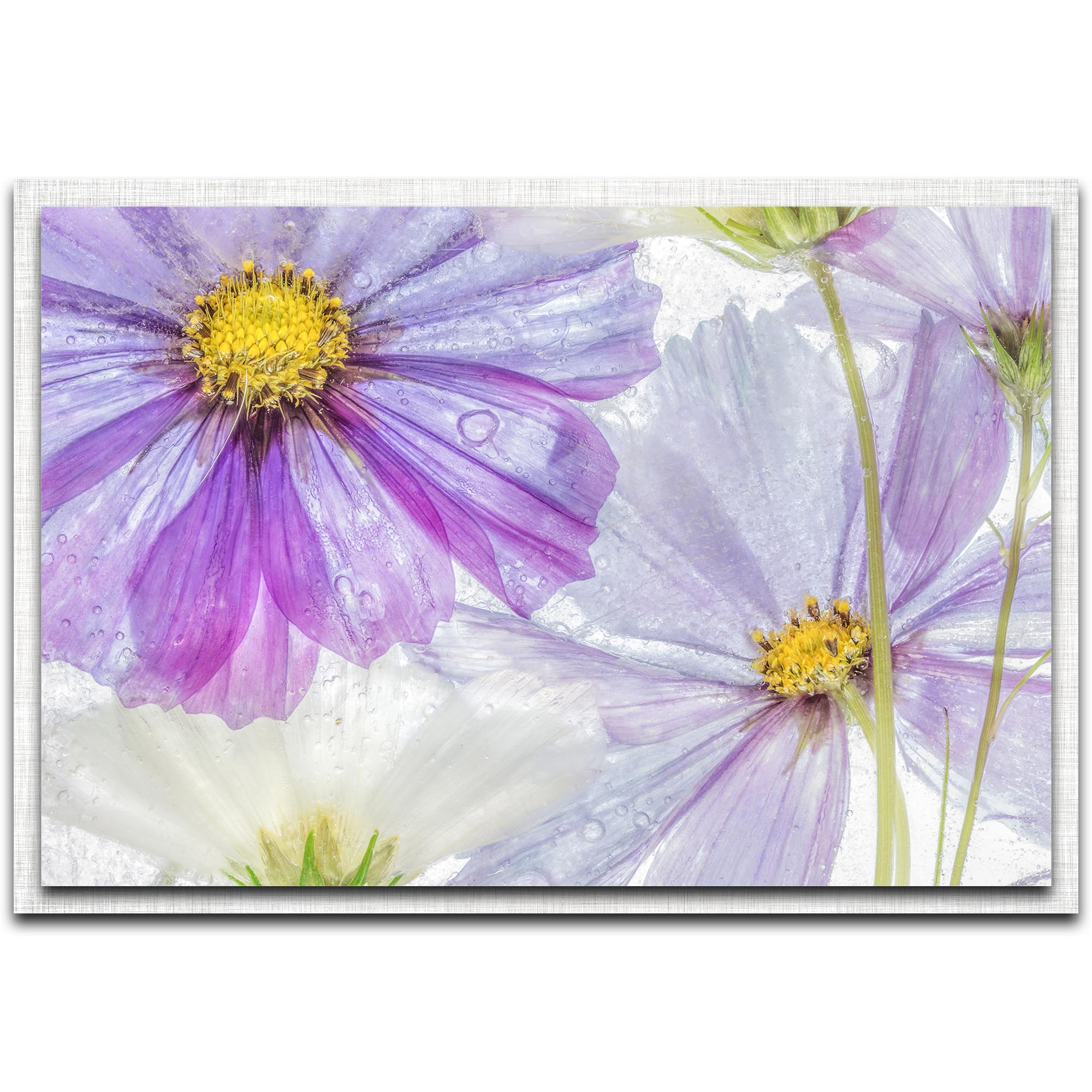 Cosmos Cool by Mandy Disher - Modern Farmhouse Floral on Metal