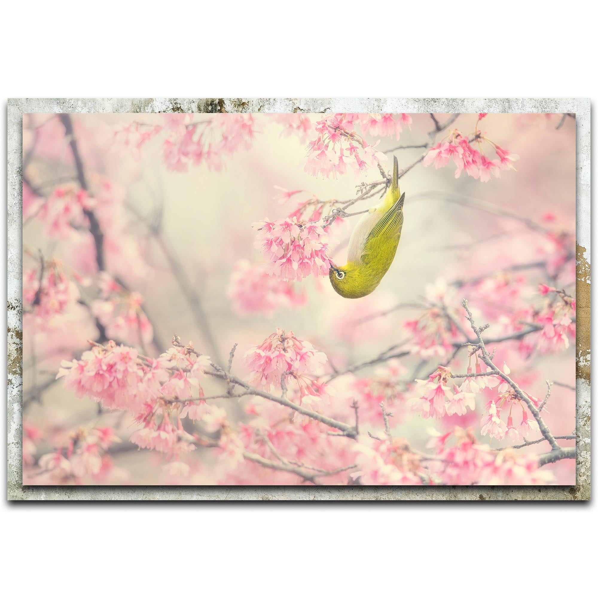Cherry Blossom Color by Takashi Suzuki - Modern Farmhouse Floral on Metal