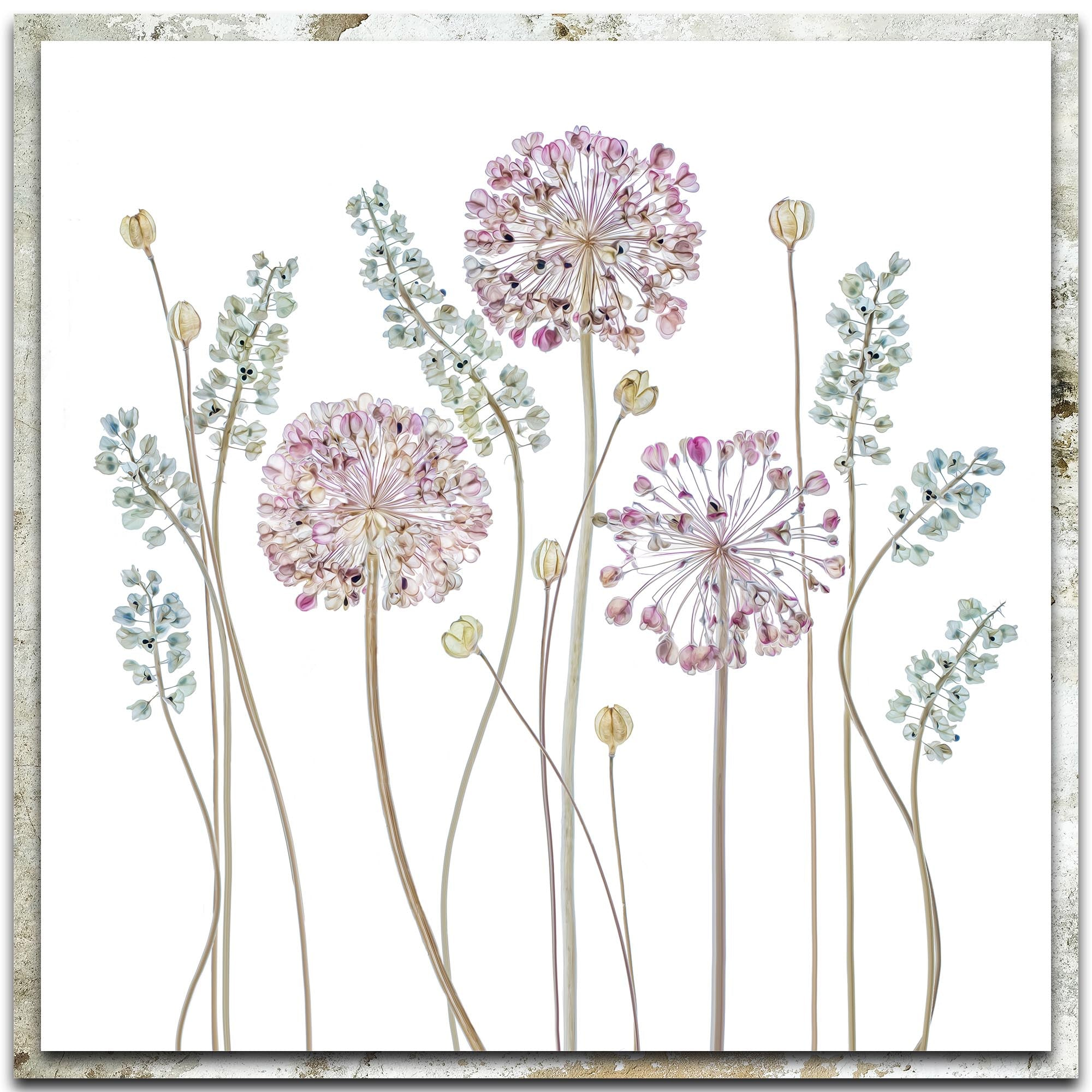 Allium by Mandy Disher - Modern Farmhouse Floral on Metal
