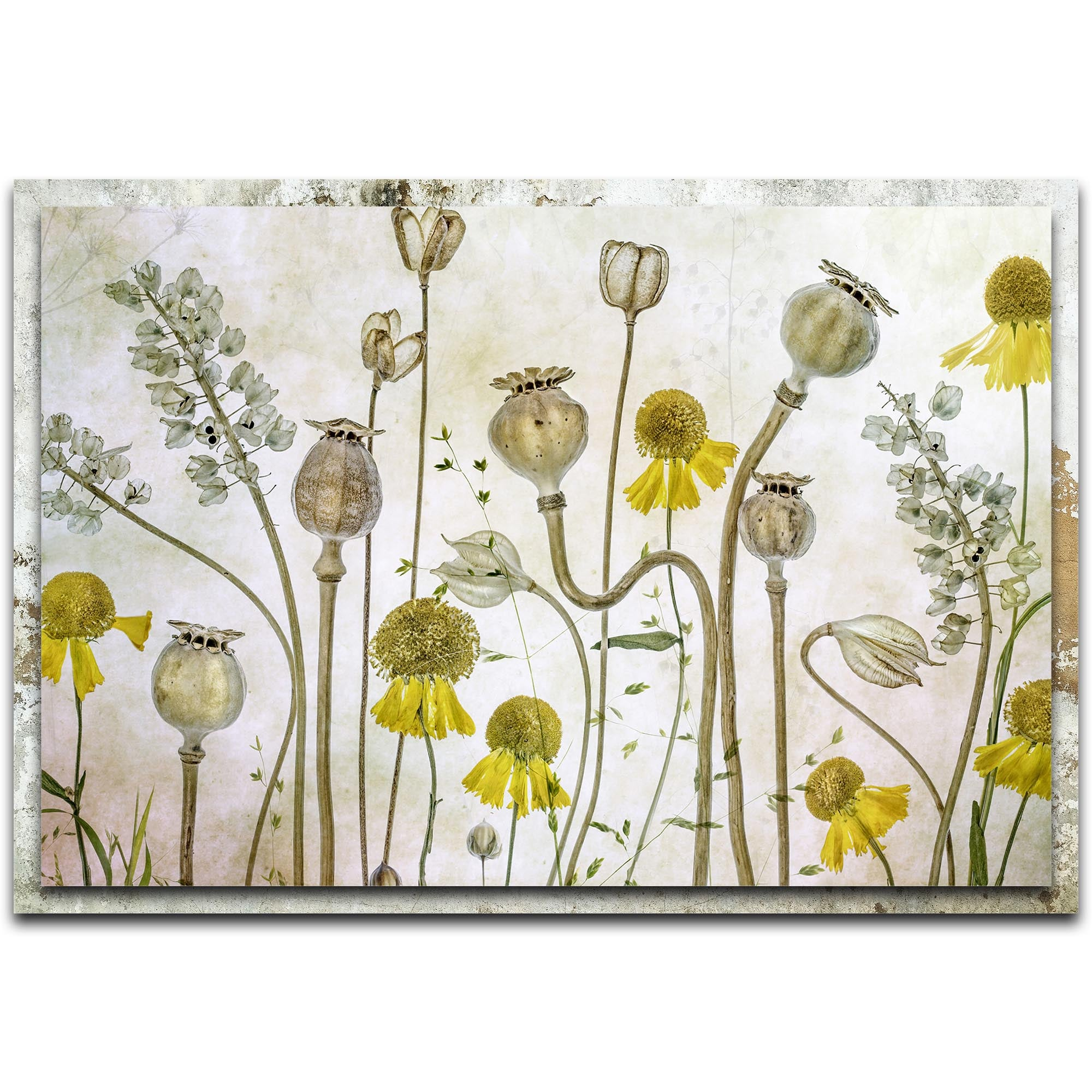 Poppies and Helenium by Mandy Disher - Modern Farmhouse Floral on Metal