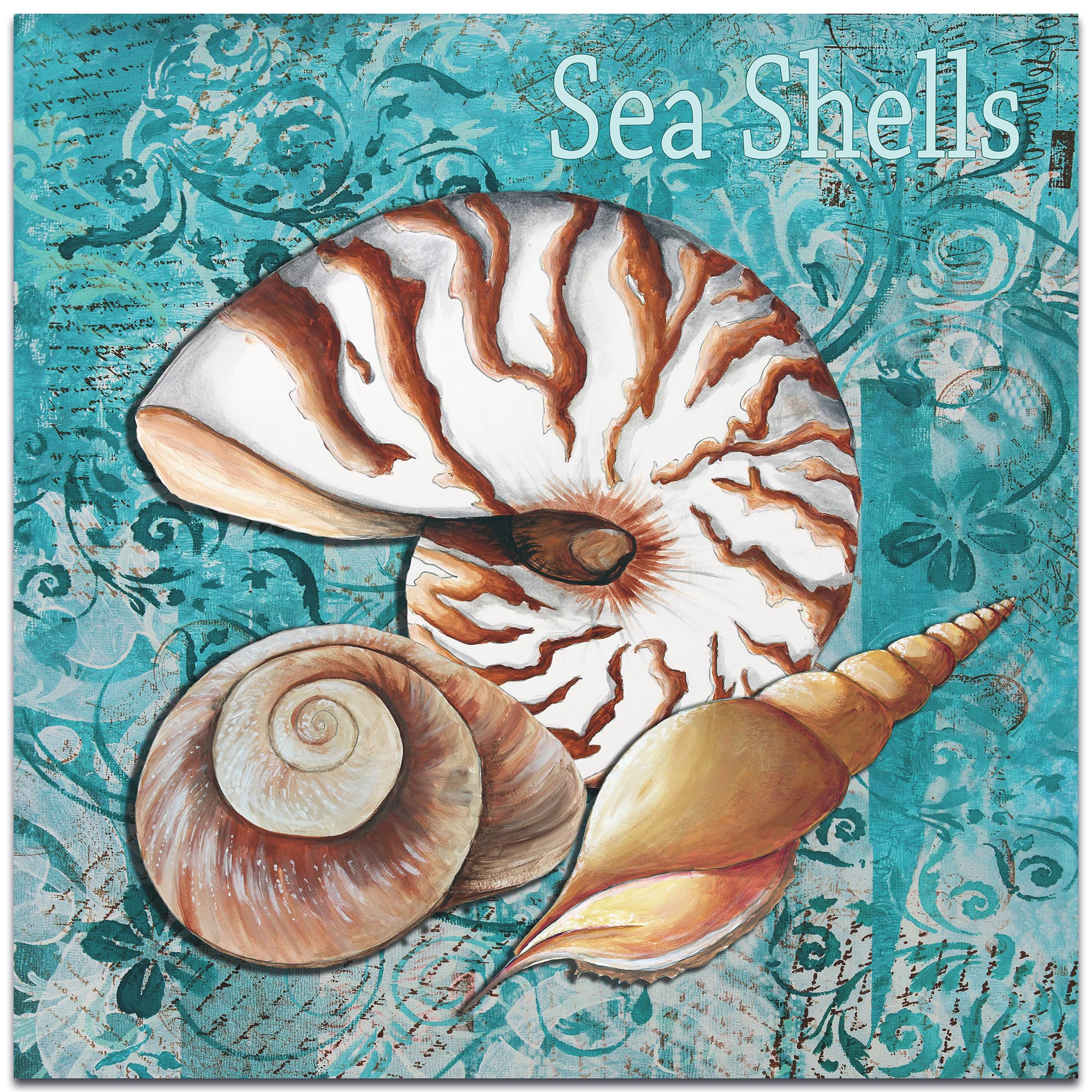Sea Shells by Megan Duncanson - Beach Decor on Metal or Acrylic