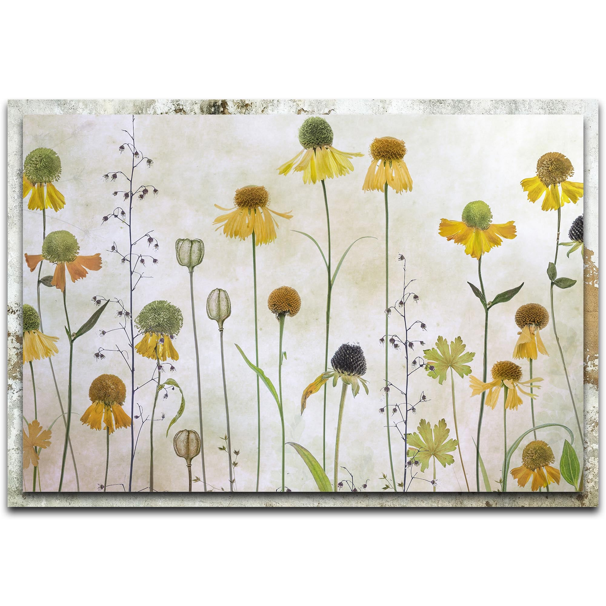 Helenium by Mandy Disher - Modern Farmhouse Floral on Metal