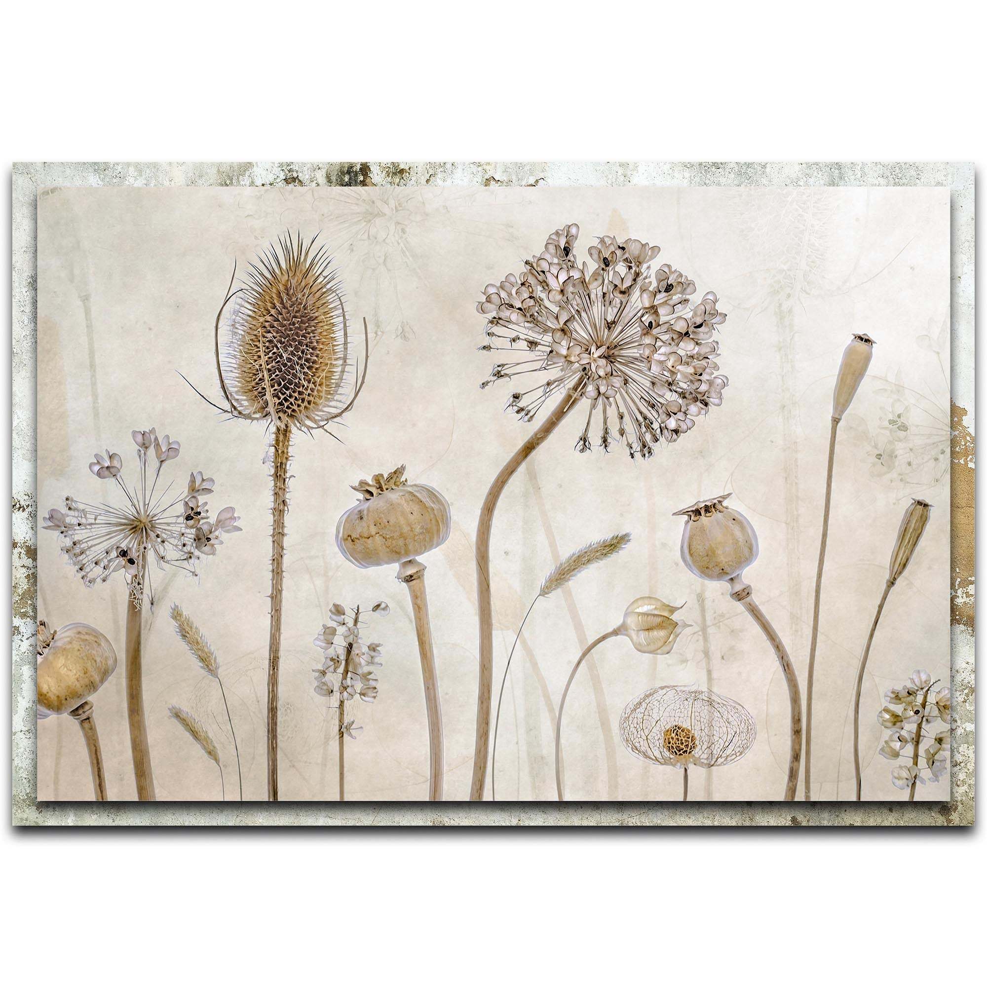 Growing Old by Mandy Disher - Modern Farmhouse Floral on Metal