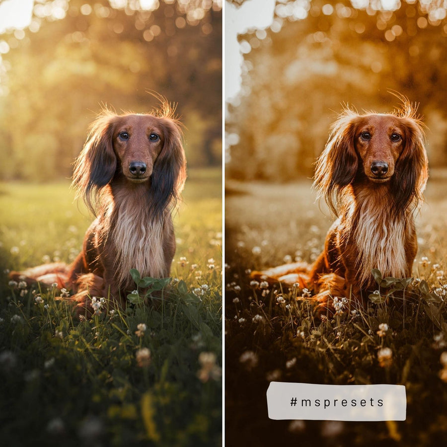 GOLDEN HOUR | preset by Maxine Stevens