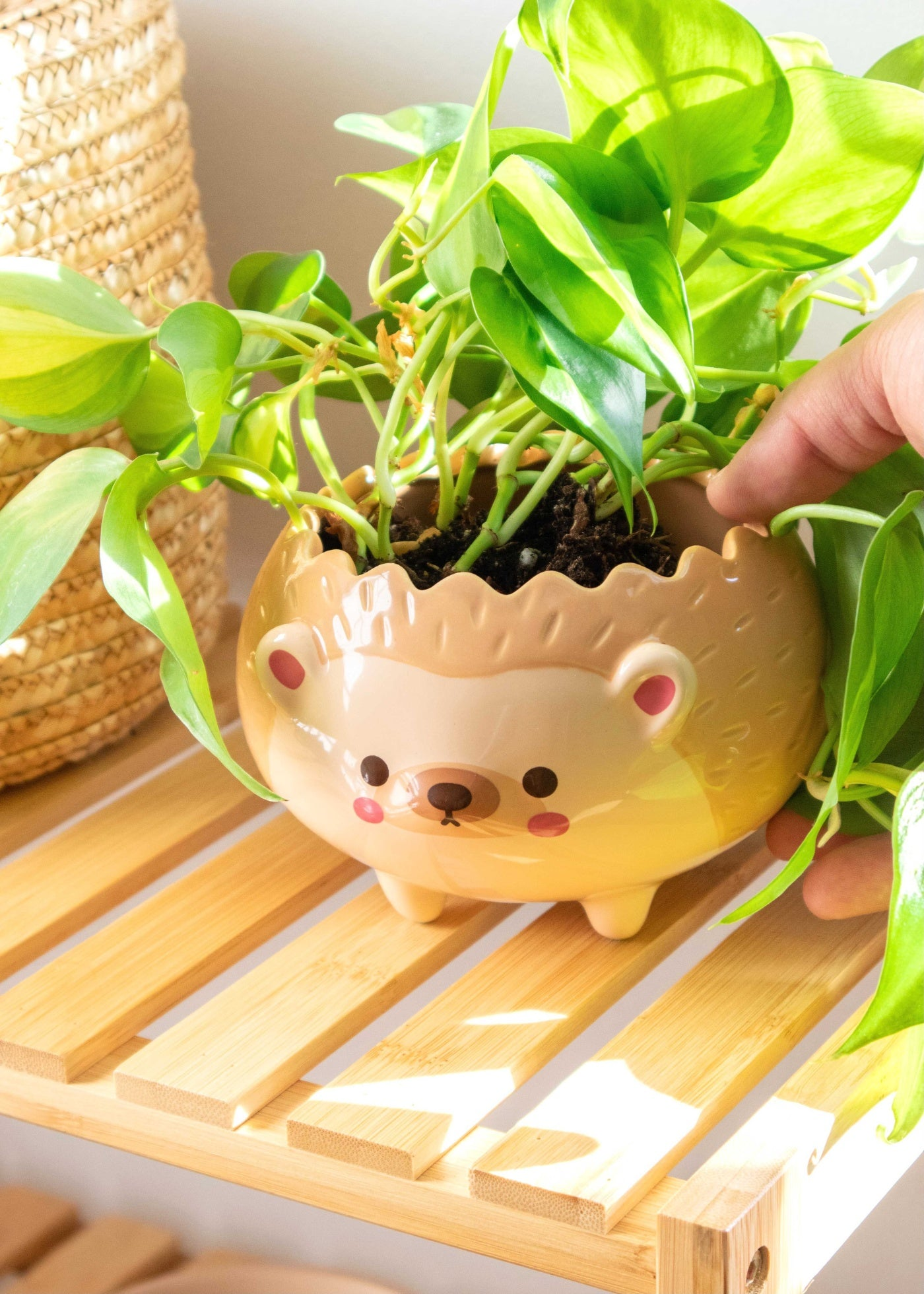 Heji Hedgehog Planter