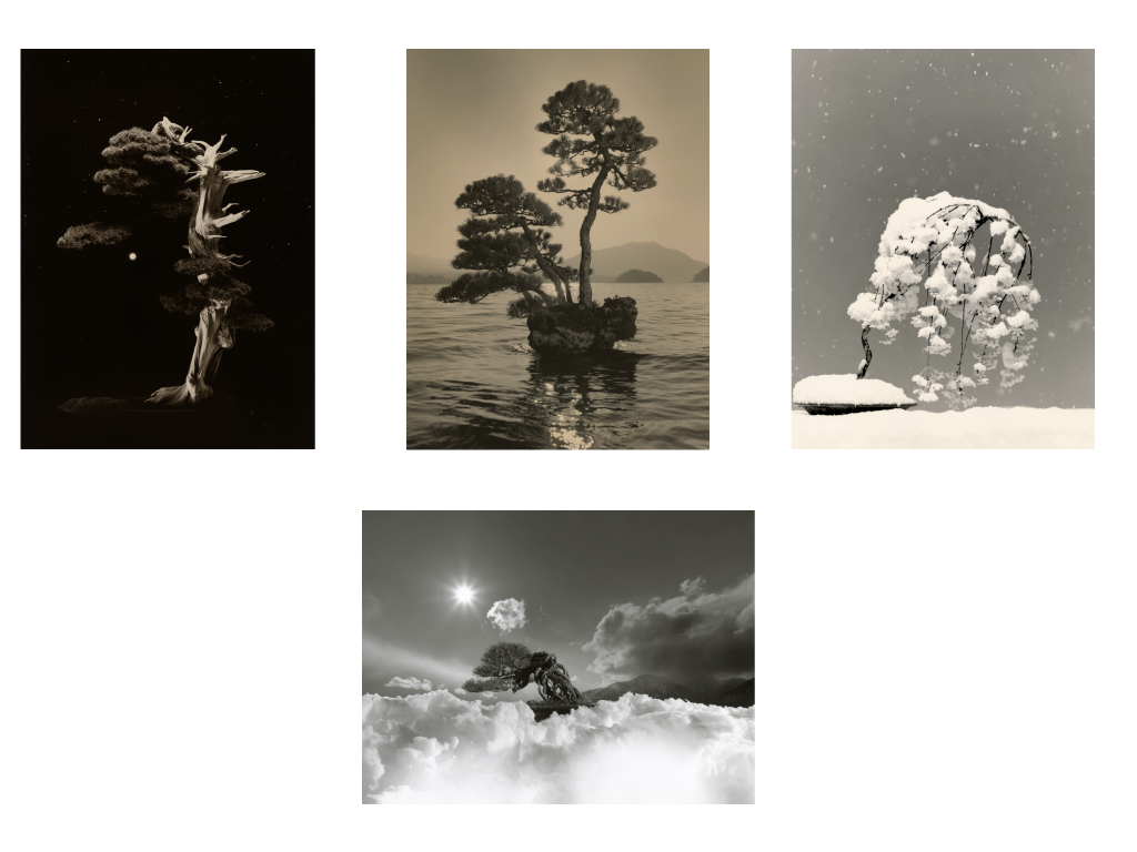 Bonsai - Microcosms Macrocosms(Deluxe Edition) by Masao Yamamoto