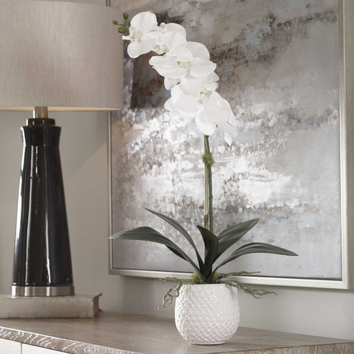 "A gracefully arching stem of white orchids with reindeer moss accents over a bed of naturally preserved moss, placed in a contemporary textured white ceramic pot. Container is 4.5"" W x 4.5"" H x 4.5"" D."