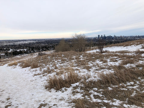 Nose Hill Off Leash Dog Park View