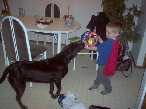Peppsy the black lab plays with a little boy named max