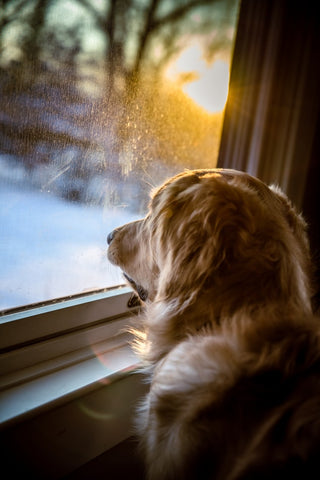Dog looking out the window at the cold
