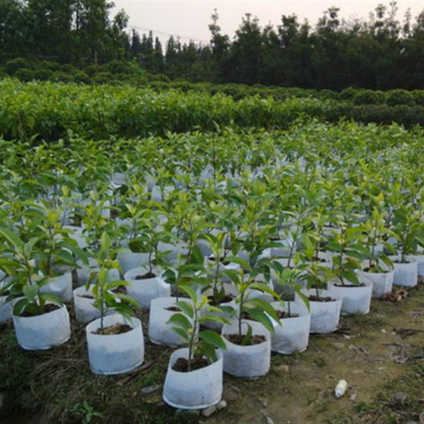 Nonwoven Round Grow Bags 10Pcs/Set Nursery Pots Plant Pouch Root Container Planter Flower Plant Grow Bag 4 SIZES Garden Supplies