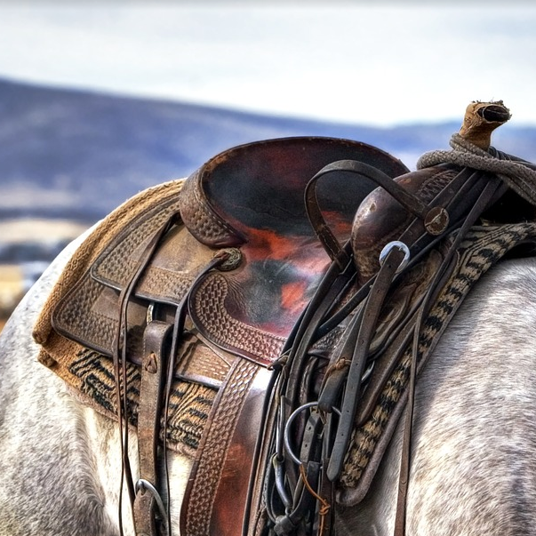 how-to-cinch-a-western-saddle