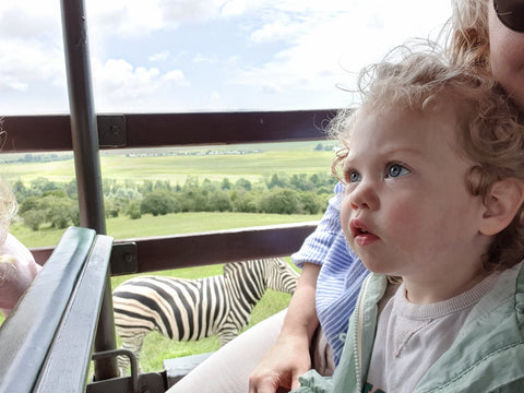Safari with a toddler and seeing a Zebra