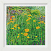 Achillea Signed Edition Print