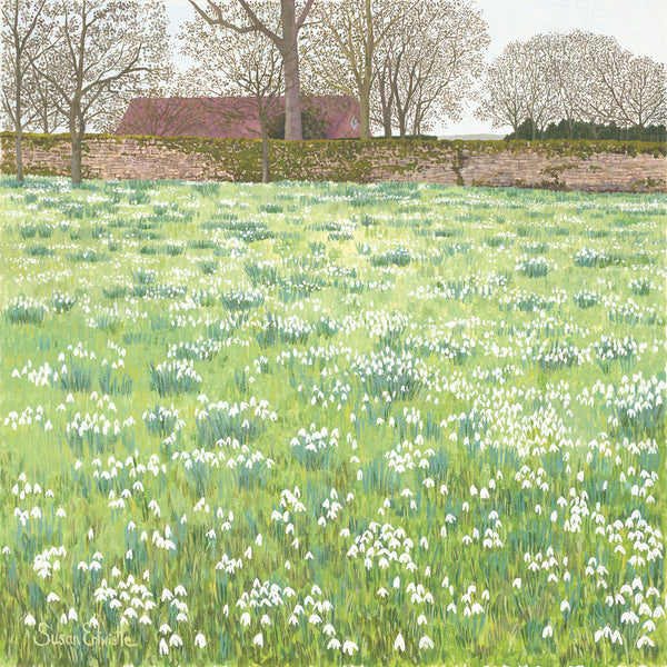 Snowdrops - limited edition print