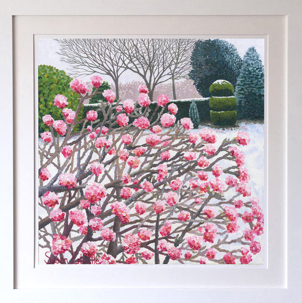 Winter Viburnum Signed Edition Print