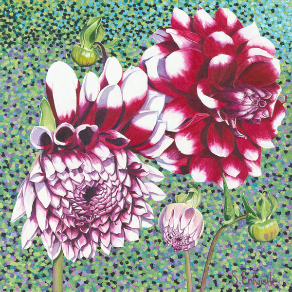 Garden Dahlia limited edition paper print SALE PRICE