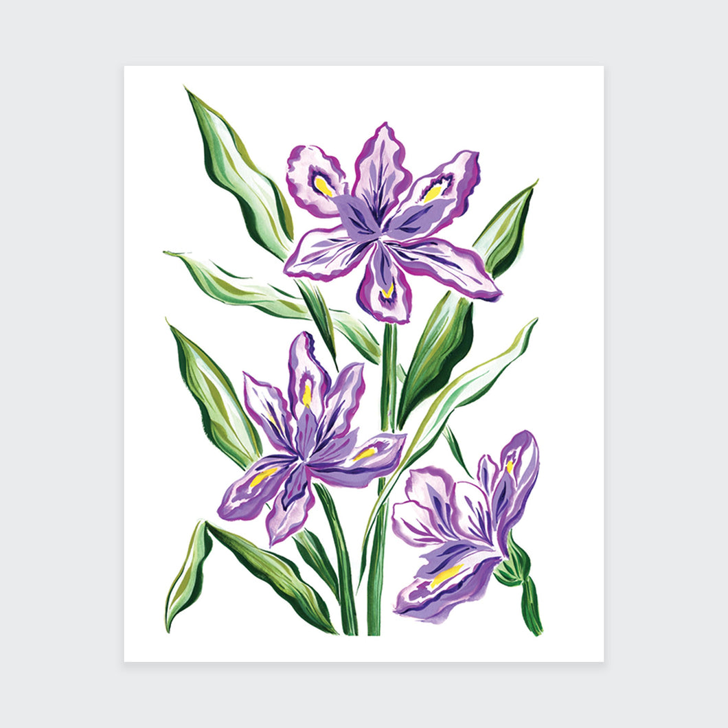 Purple Iris Flower Art Print