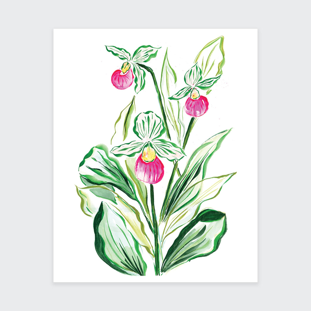Pink Lady Slipper Art Print