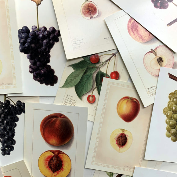 Heirloom & Agricultural Art - 4x6 Cards - Dingdong's Garden