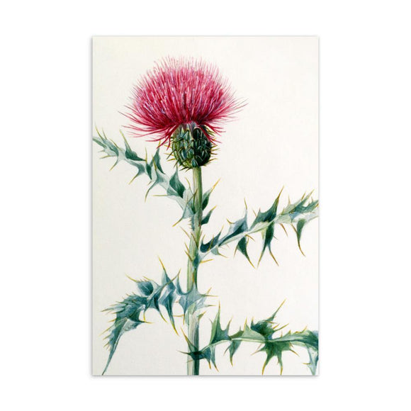 Cirsium arizonica (Thistle) Wildflower Artwork 4x6 Card - Dingdong's Garden