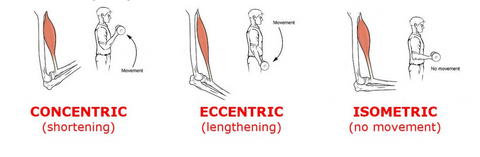 concentric, excentric, isometric, exercises
