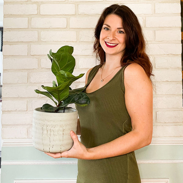 Ficus lyrata in the hands of the founder Myriam - mimipots