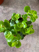Upload image to gallery, Succulents
