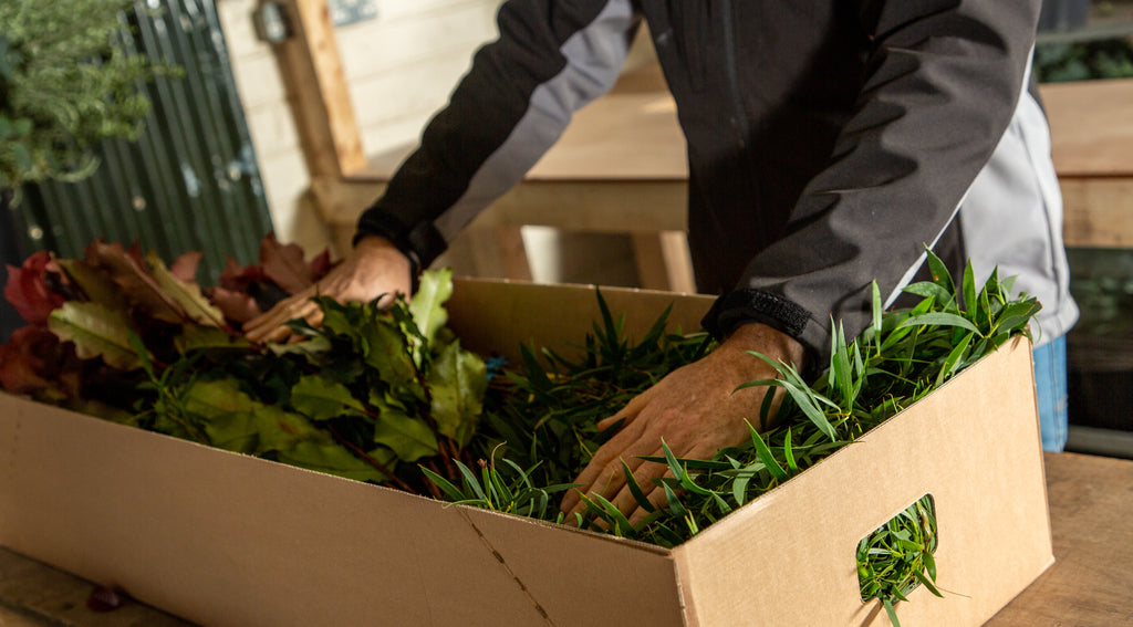 Hands packing foliage into a branded Irish Green Guys box