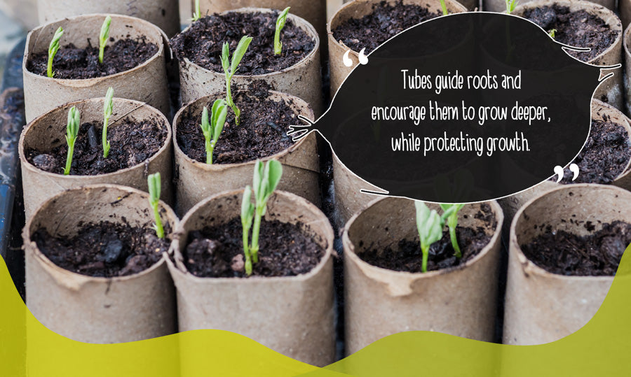 Seeds planted in cardboard toilet roll tubes