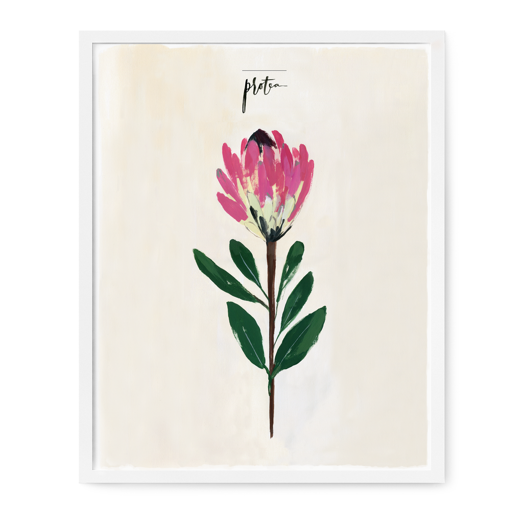 Single Stem Series - Protea Print
