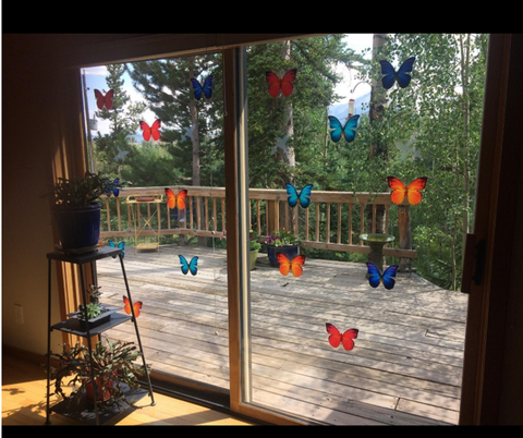 Butterfly Window Clings by Window Flakes :: Photo Thanks - Bruno