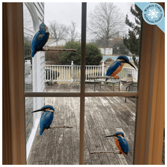 Anti-Collision Window Clings - Kingfisher Birds  (Set of 4)