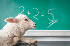 Sheep that can't add- referencing how bad writing makes people look dumb