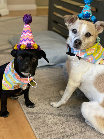 Featuring our Retro Dog over the collar bandana and party hats