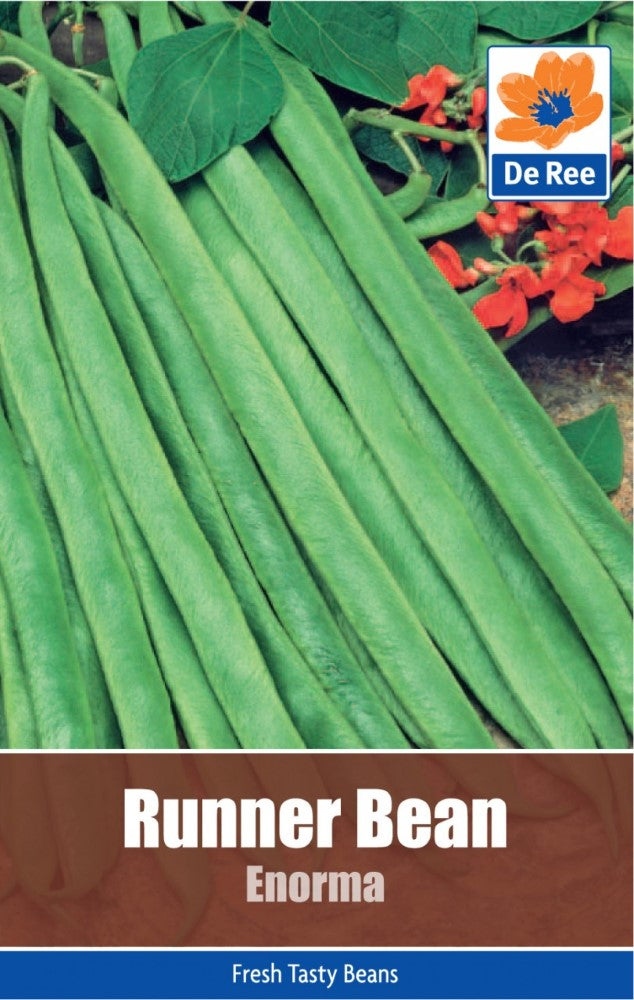 Runner Bean: Enorma Seeds