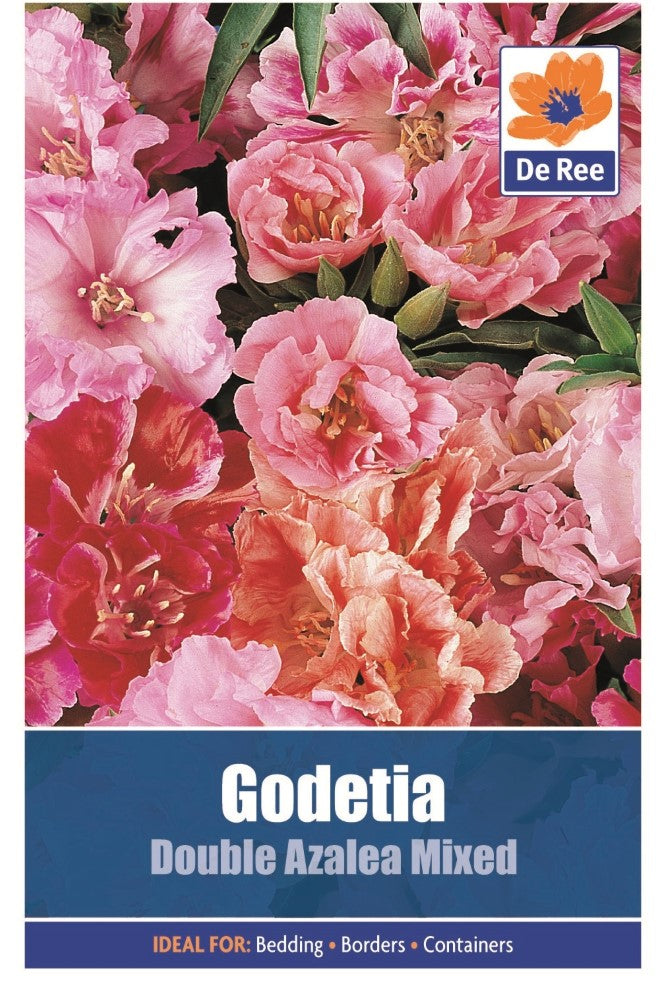 Godetia: Double Azalea Mixed