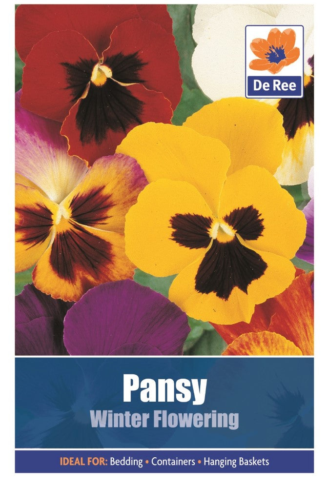 Pansy: Winter Flowering Seeds