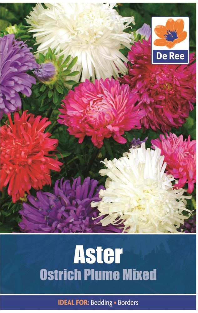 Aster: Ostrich Plume Mixed Seeds
