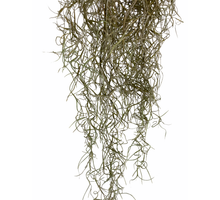Load image into Gallery viewer, Tillandsia Valerie - Flowers Palermo