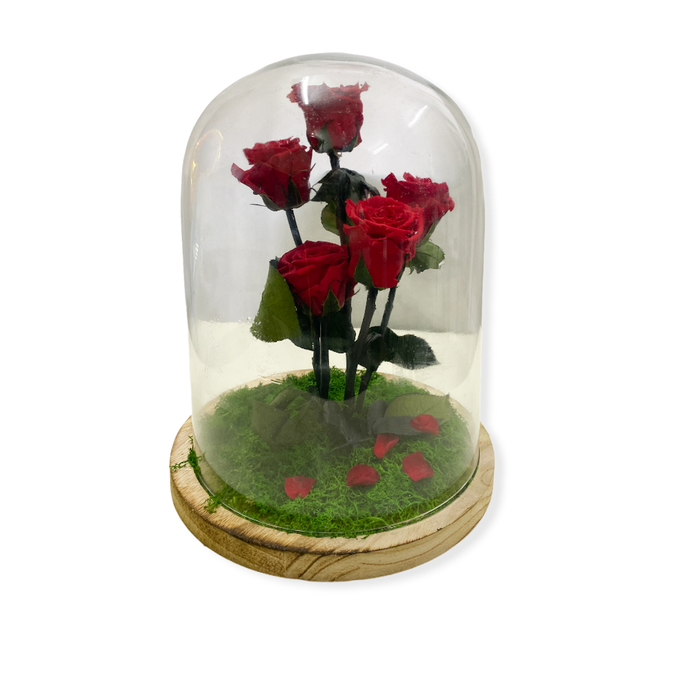 Teca Rose stabilizzate rosse - Only you - Flowers Palermo