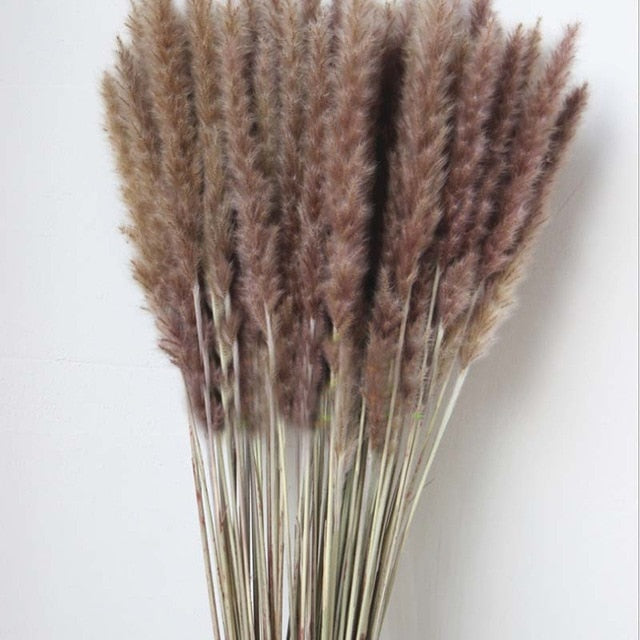 Naturally Preserved and Dried Pampas Grass Reed Flower