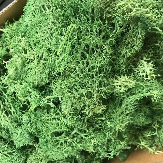 Artificial Moss for Decorative Preserved Flowers Accessories