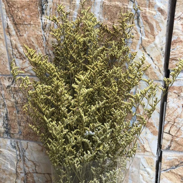 Naturally Preserved Lover Grass or Dancing Flowers