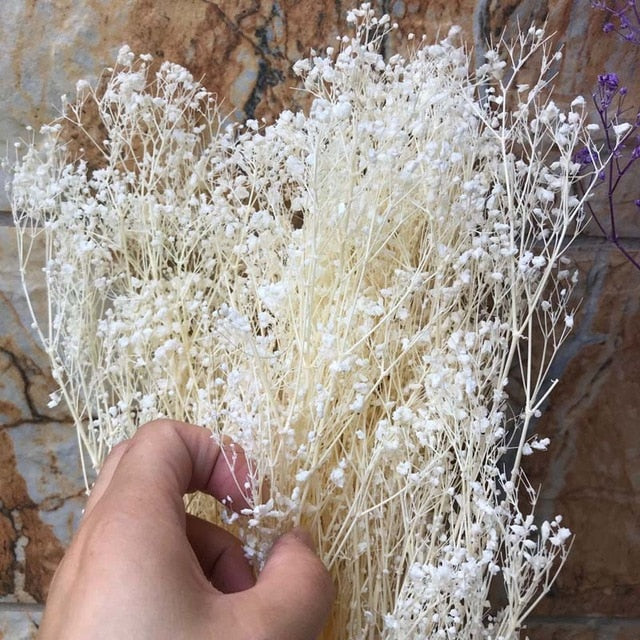 Naturally Preserved Babysbreath or Gypsophile Flowers